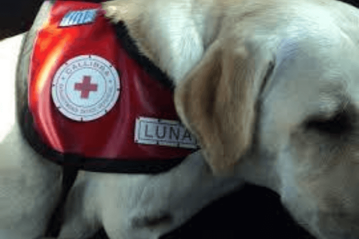 Σκύλος θεραπείας Λούνα