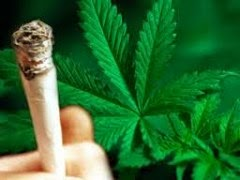 Φωτογραφία φυτού Κάνναβης και τσιγάρου