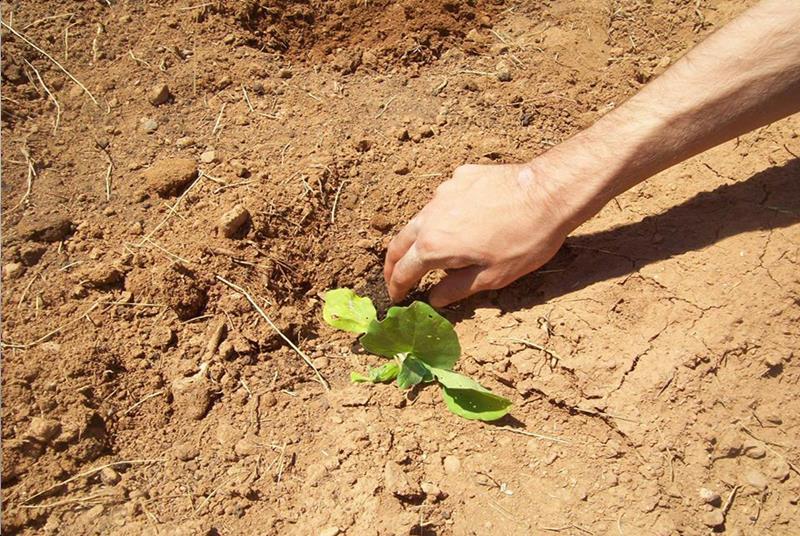 Χέρι που φυτεύει