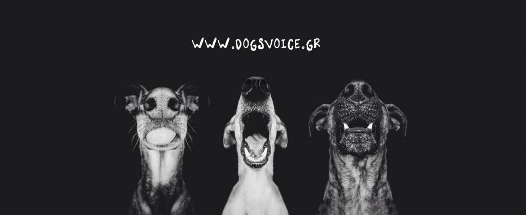 3 σκύλοι
