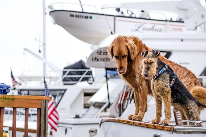 δύο σκύλοι πάνω σε σκάφος