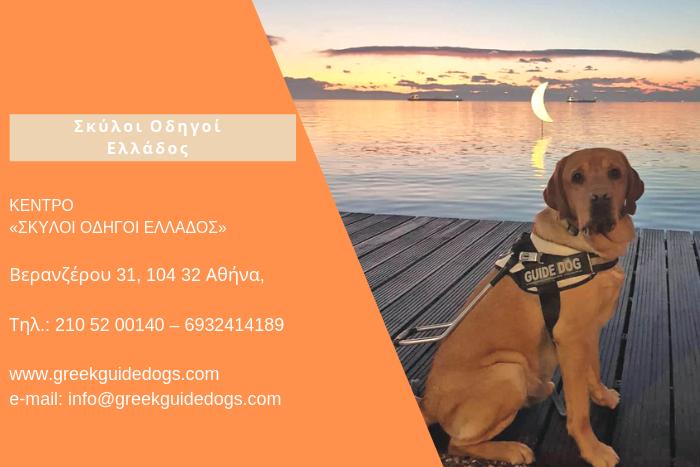 Σκύλος Οδηγός και μπάνερ πληροφοριών για το κέντρο