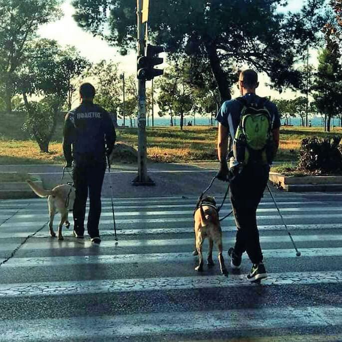 Σκύλοι οδηγοί περνάνε διάβαση πεζών τυφλούς χρήστες