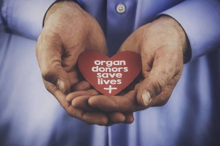 """χέρια ανθρώπου που κρατάνε μια καρδιά που """"οι δωρητές οργάνων σώζουν ζωές"""""""