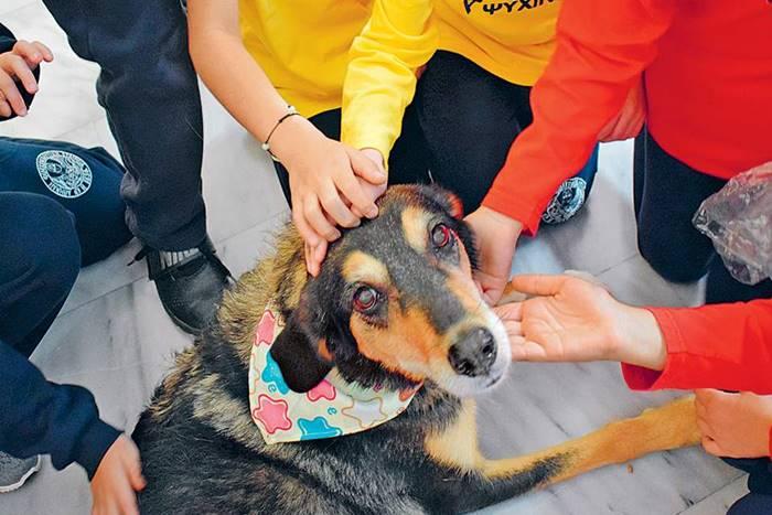 Σκύλος θεραπευτής που τον χαϊδεύουν χέρια
