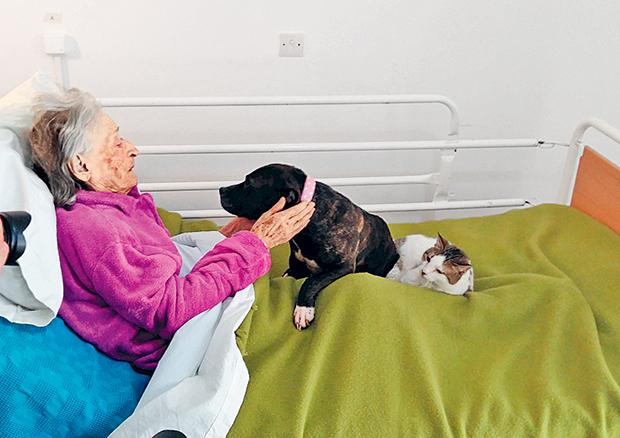 Σκύλος και γάτα αγκαλιά σε ηλικιωμένη κυρία