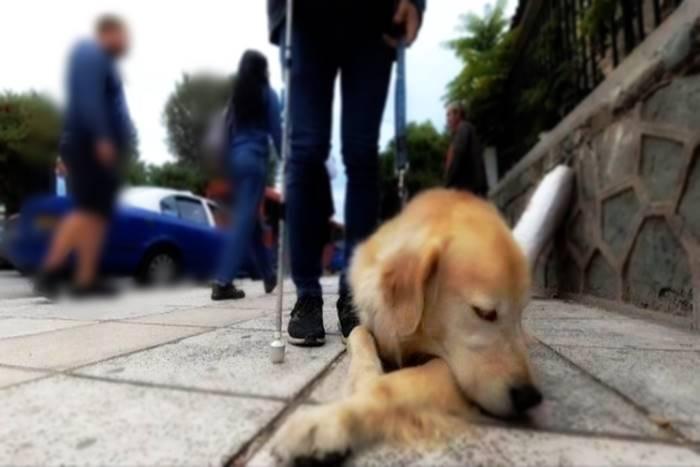 Σκύλος οδηγός και μπαστούνι τυφλού ανθρώπου