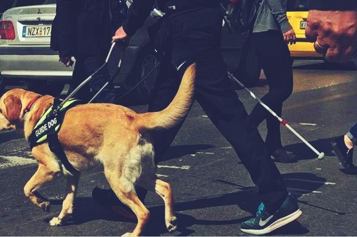 Najak: Ο σκύλος-οδηγός που συντροφεύει 28χρονο με οπτική αναπηρία