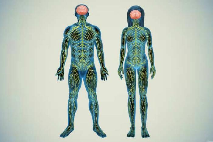Δύο ανθρώπινα σώματα φωτισμένα τα νεύρα τους.