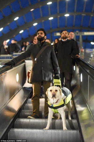 Ο Αμιτ Πατέλ με το σκύλο οδηγό του σε κυλιόμενες σκάλες