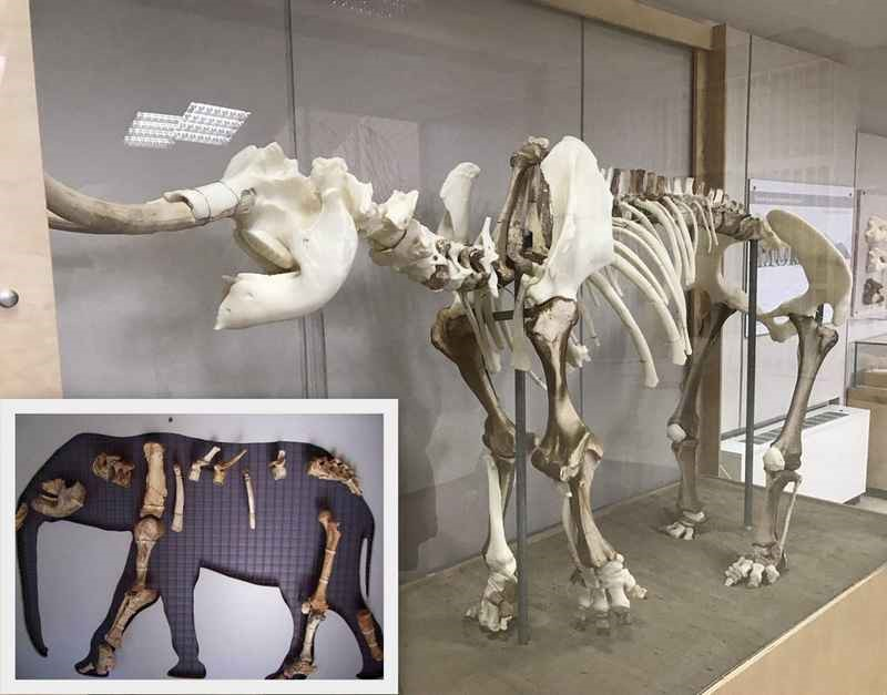 3D Εκτύπωση του προϊστορικού ελέφαντα της Τήλου