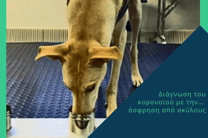 Σκύλος που μυρίζει κάτι σε ένα δοχείο