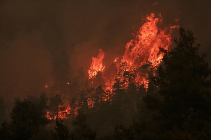 Πυρκαγιά σε δάσος, φλόγες καίνε δέντρα