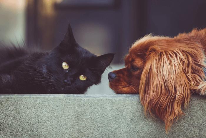 Σκύλος και γάτα απλωμένα στο πάτωμα, ο σκύλος κοιτάει τη γάτα και η γάτα κοιτάει τον φακό